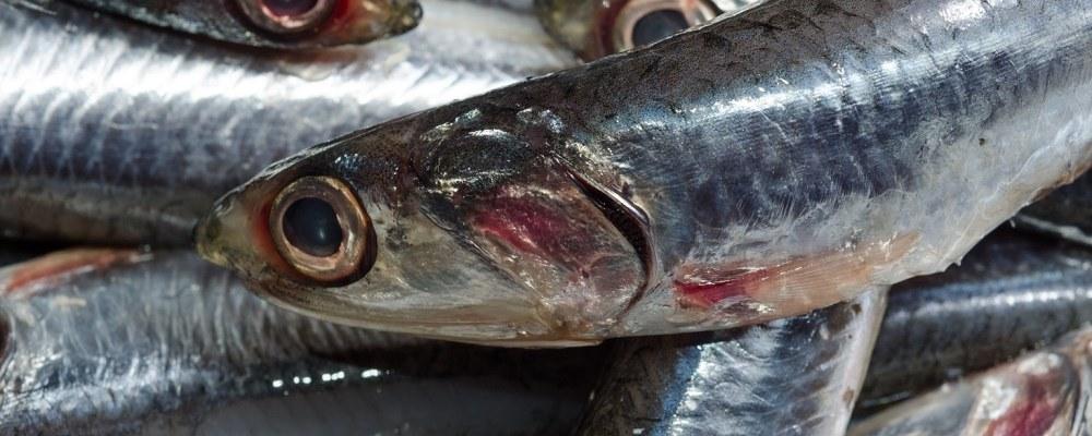 Βαρέα μέταλλα και κατανάλωση ψαριών